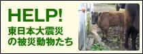 HELP! 東日本大震災の被災動物たち