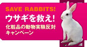 SAVE RABBITS!: ウサギを救え! 化粧品の動物実験反対キャンペーン