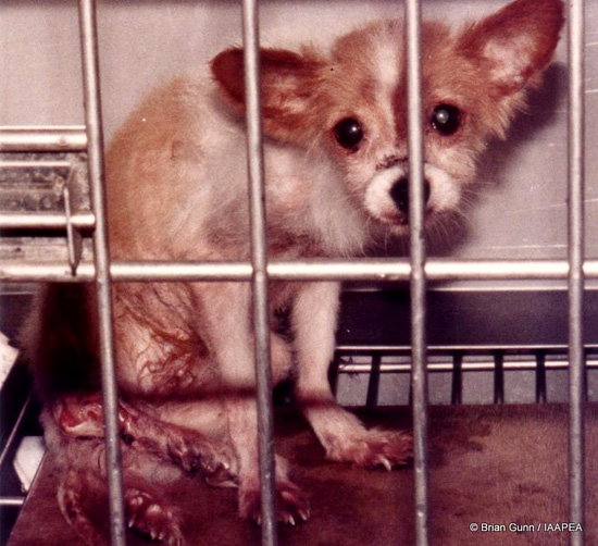 動物実験のこと | NPO法人 動物...
