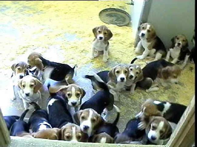 beagle-buav