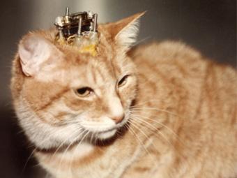 thumbnail-cat