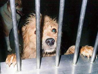 犬や猫のこと | NPO法人 動物実...