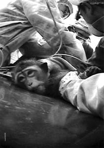 monkey-buavRD.jpg