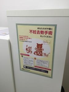 保護猫カフェ湘にゃ庵(神奈川県藤沢市)