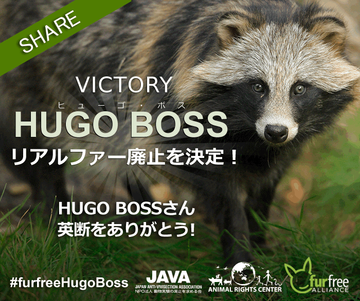 victory-hugoboss-raccoon dog
