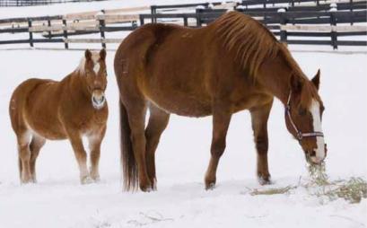 妊娠馬の悲劇